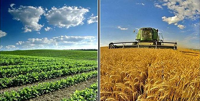 اختلاف قیمت محصولات کشاورزی در بازار داخلی و صادراتی/طرح انتزاع وظایف از روی میز دولت تا اجرا