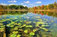 سازمان حفاظت محیط زیست مکلف به تعیین نیاز آبی زیست محیطی تالابها شد