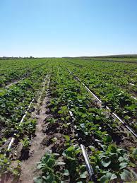 تشکیل کارگروه ویژه نظارت بر فروشگاههای کشاورزی در شهرستان رودبار جنوب